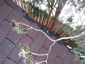Roof Leak Repair Ann Arbor MI - Renaissance Roofing - Tree-Damage