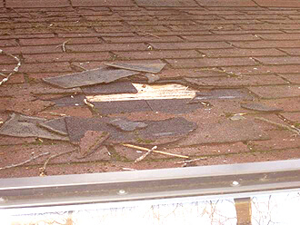 Roof Leak Repair Novi MI - Renaissance Roofing - Wild-animals